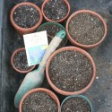 Early Spring 2012: Gardening Begins